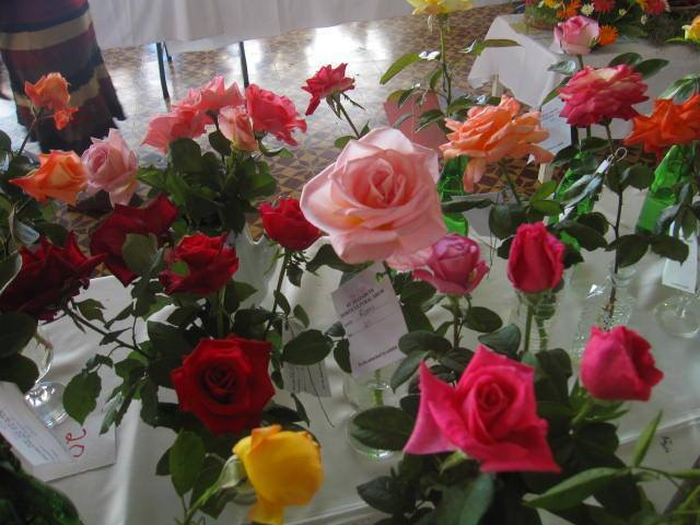 Roses at St. Elizabeth Flower Show in Jamaica 2016