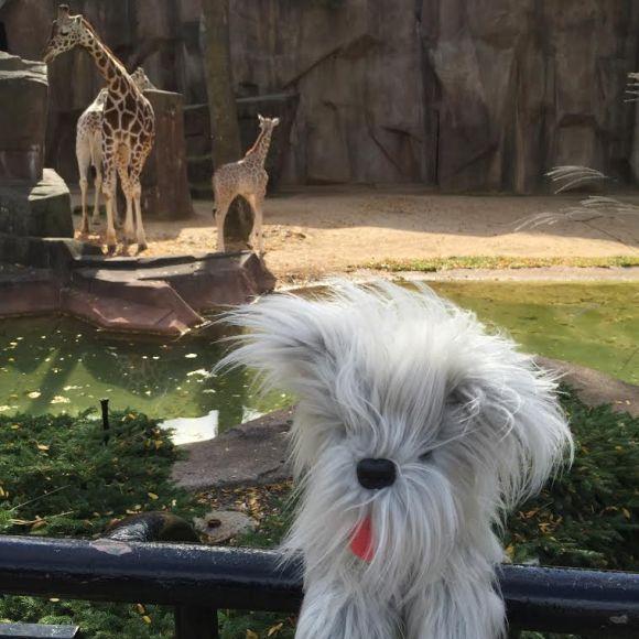 Sunny at the Milwaukee County Zoo