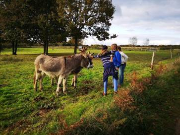 blog-maman-forme-instruction-en-famille-campagne-animaux