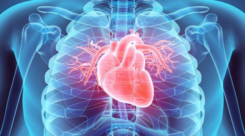 Human Heart: location, size, functions, complications |