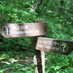 1,3km, pfff, easy :D