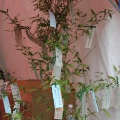 Wünsche auf Papier an Bambus