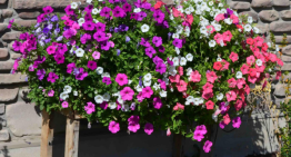 How to make a DIY cascading flower pallet planter