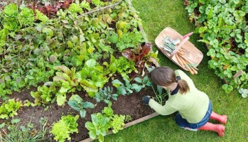 Essential Garden Jobs for August