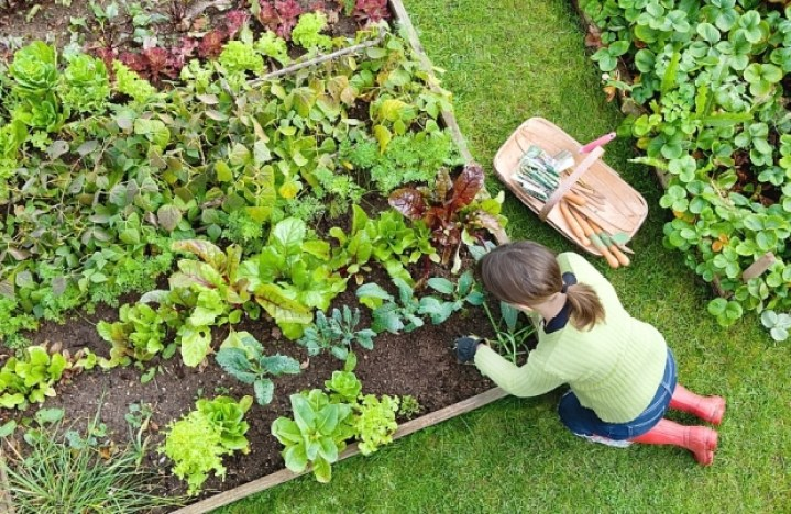 essential garden jobs for august the handy mano manomano VEGETABLE PATCH gardening