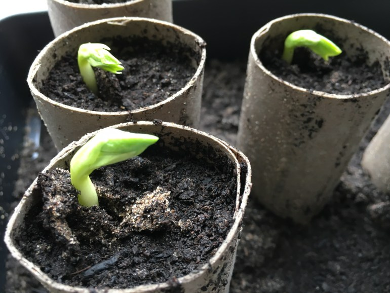 Eight winter jobs to get your garden ready for the new growing year garden diy manomano the handy mano
