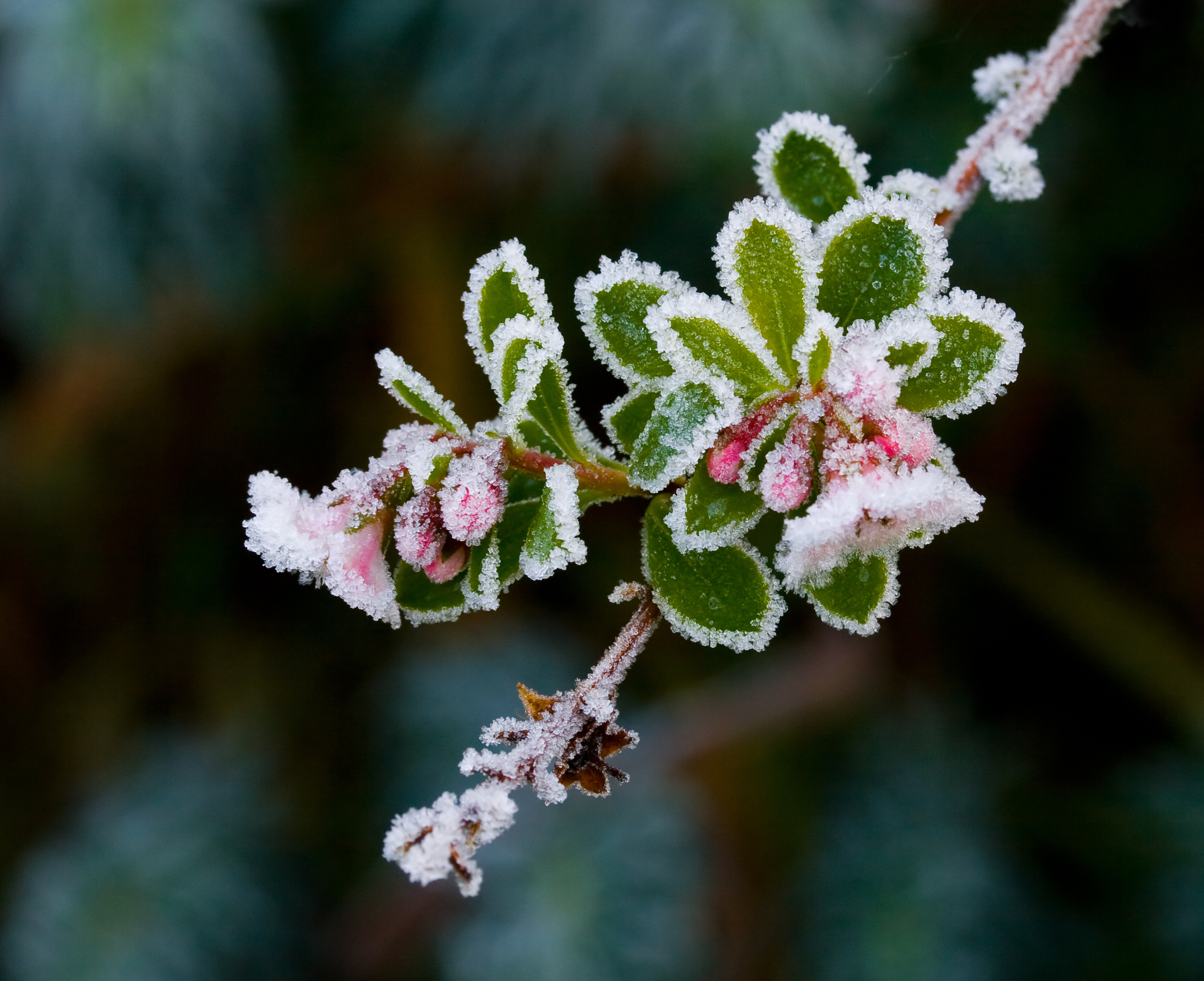 Essential Gardening Jobs for December the handy mano thehandymano mano mano manomano diy do it yourself garden winter cold flower in frost