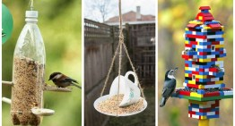 10 Simple Ways to Make a DIY Bird Feeder