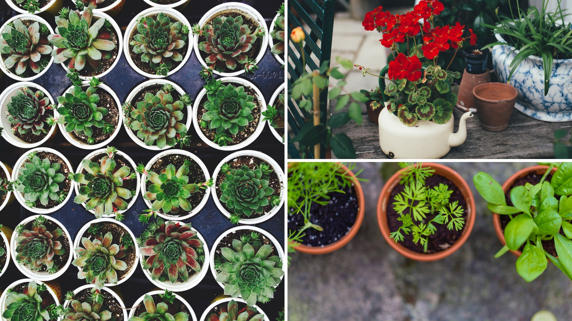 thehandymano mano mano decking ideas for small gardens plant pots herbs flowers