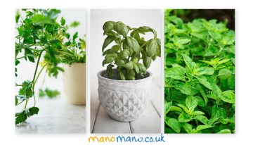 Indoor Herb Gardening for Beginners