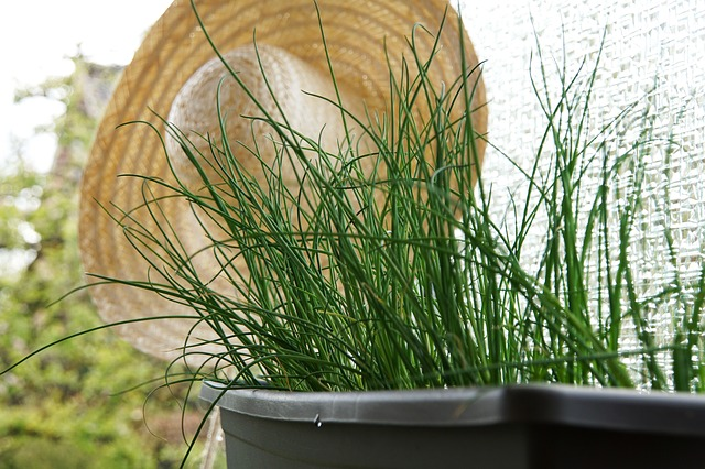 thehandymano mano mano Herb Gardening for Beginners Chives