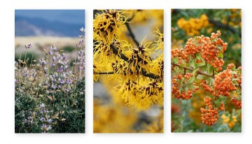 Types of Shrubs – Seasonal Guide