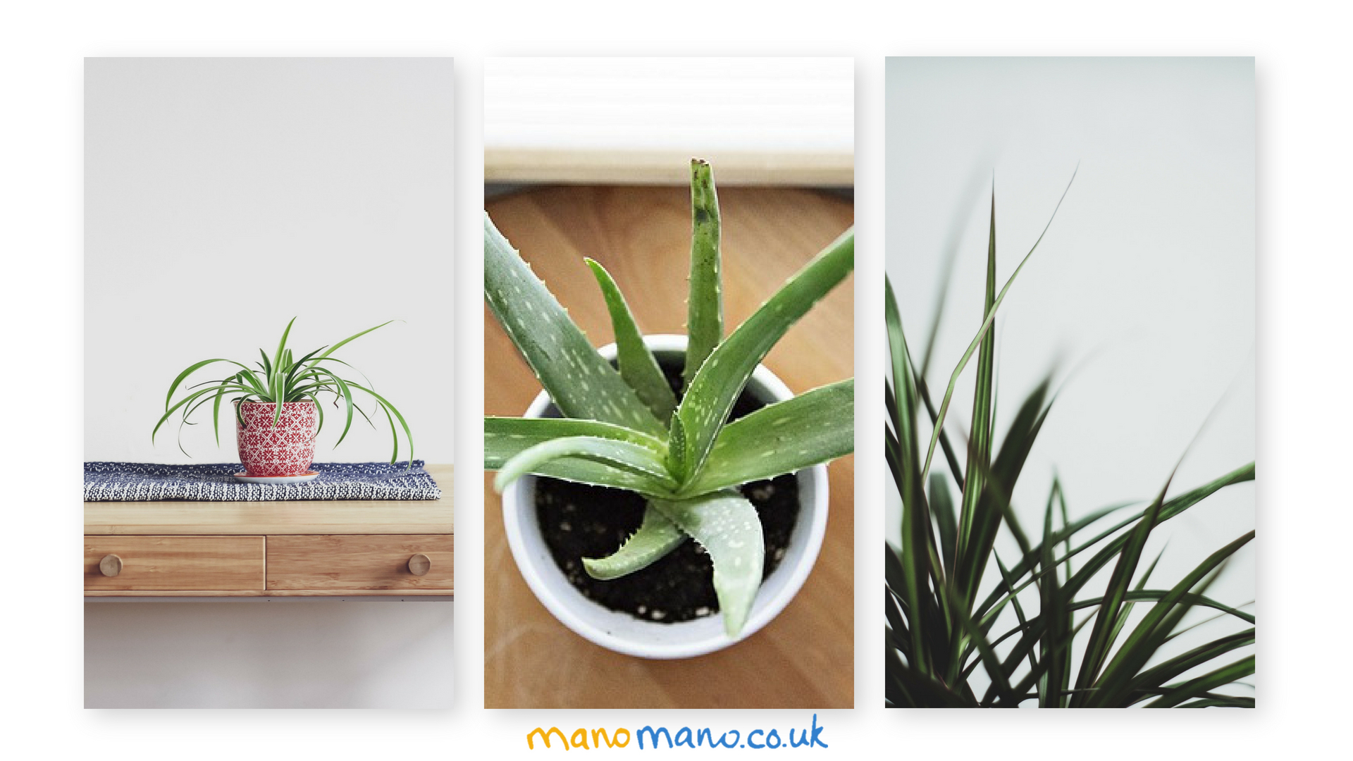 Top 20 Useful Indoor House Plants - The Handy Mano