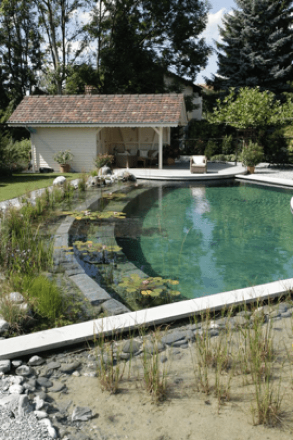 Biological filtration for your natural swimming pool