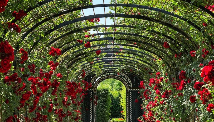 How to create a rose garden in 9 easy steps