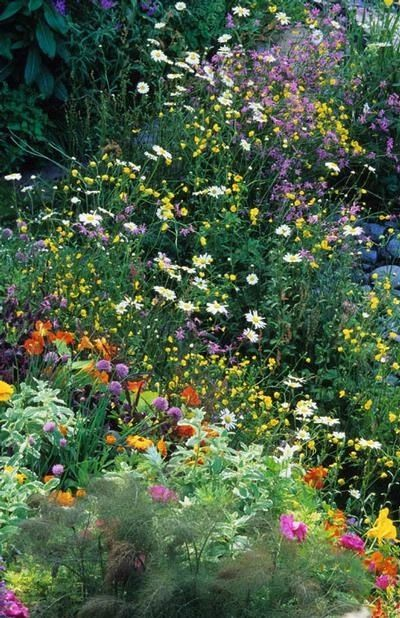 How to Help the Bees bee Friendly Plants the handy mano thehandymano mano mano garden gardening honeybee wildflower meadow
