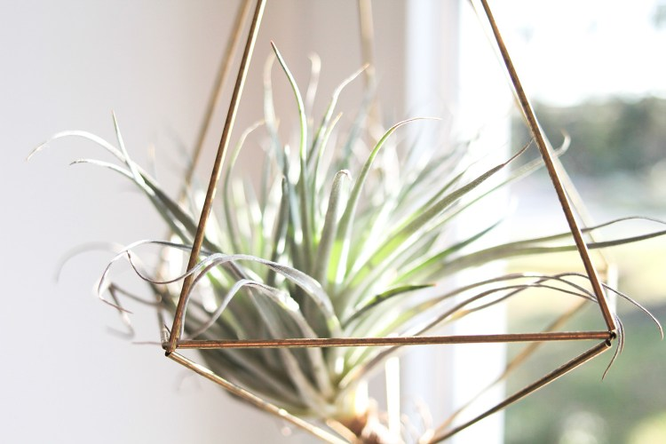 Suspension pour plantes DIY