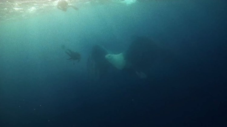 Up & Up Coldplay - underwater flying eagle