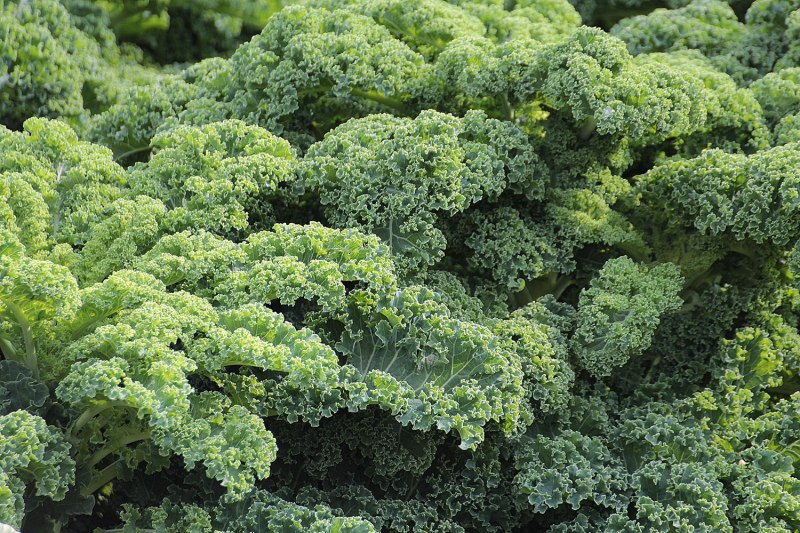 60 6 fitness foods you need on your shopping list kale