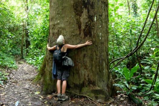Suur puu