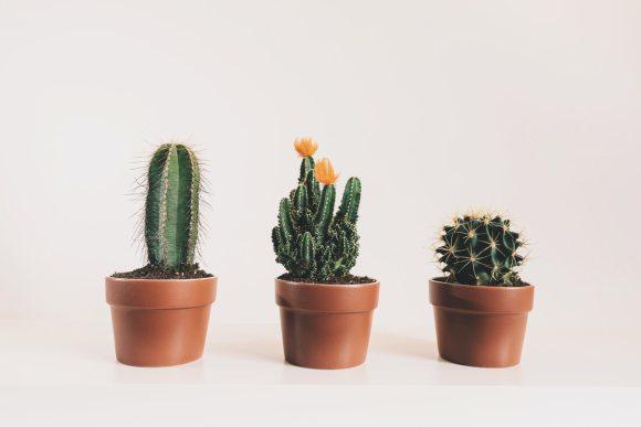 Is Cacti an Etsy long tail keyword?