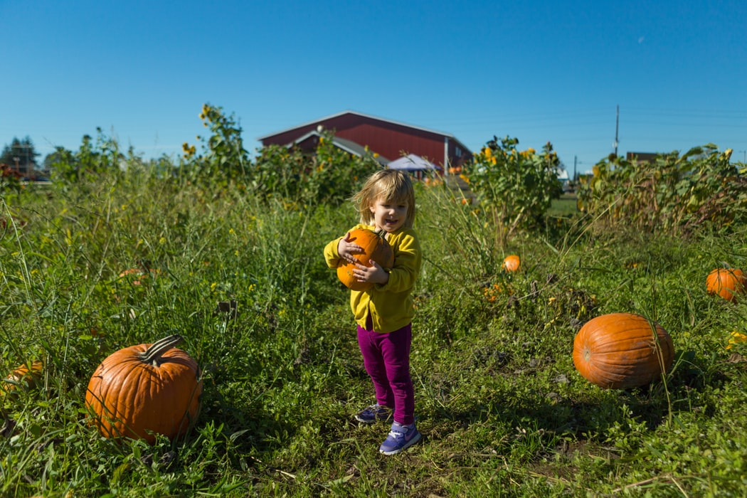 A child at a pumpkin patch.