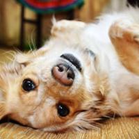 Gestos de los Perros y su Significado - Así se expresan con nosotros