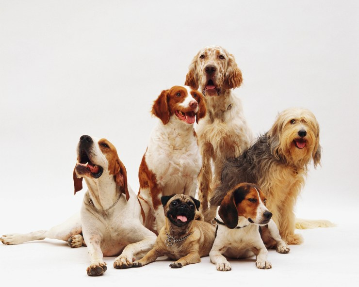 Beautiful shot of different dog breeds resting on a white surface with a white background