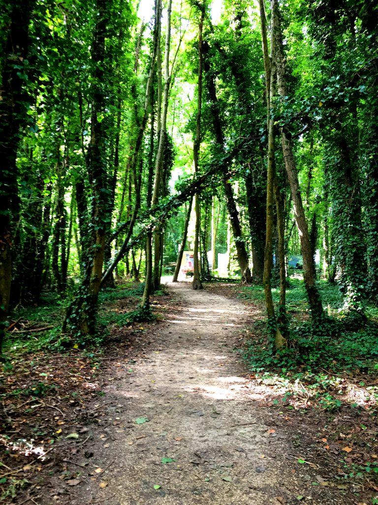 Linnan raunioihin pääsee vain kävellen pientä metsäpolkua pitkin.