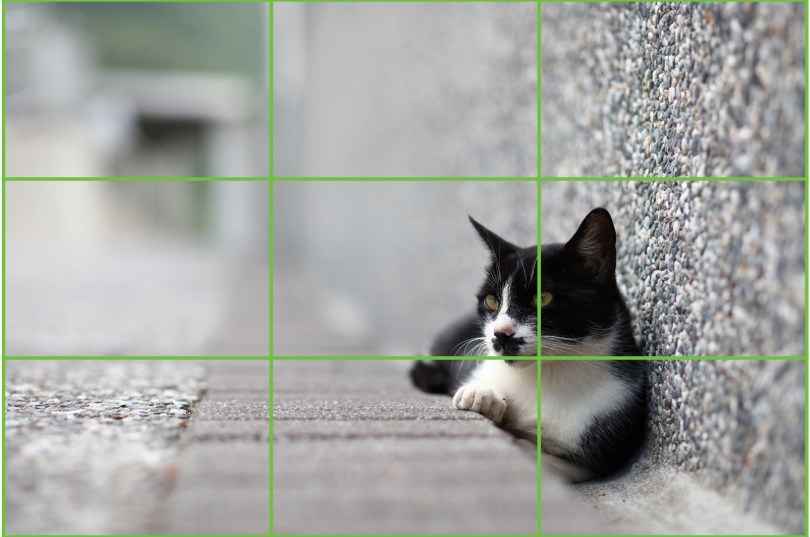The rule of thirds on a cat