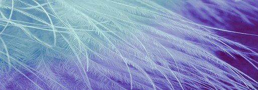 feathers-1583754__180