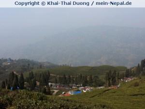 Ilam - das größte und bekannteste Tee-Anbaugebiet in Nepal.