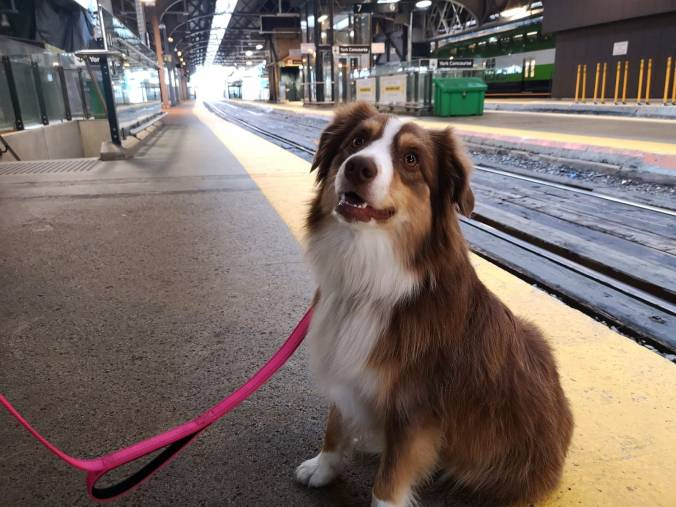 Dogs on trains 2