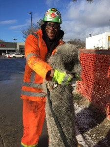 Coby the poodle joyfully jumps up on Tony the construction worker.