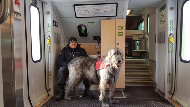 Icon, a large dog, stands on a GO train, with customer service advisor Jonathan Webb behind him.