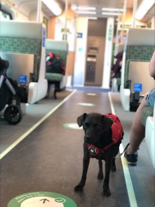 Image shows a dog on the train.