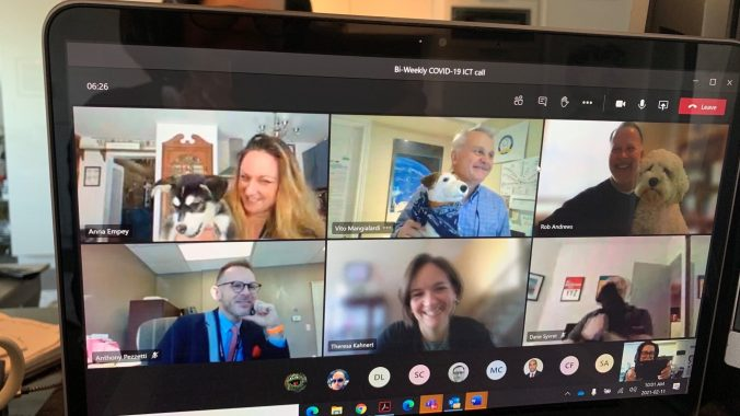 Image shows Metrolinx officials showing off their dogs on a virtual meeting.