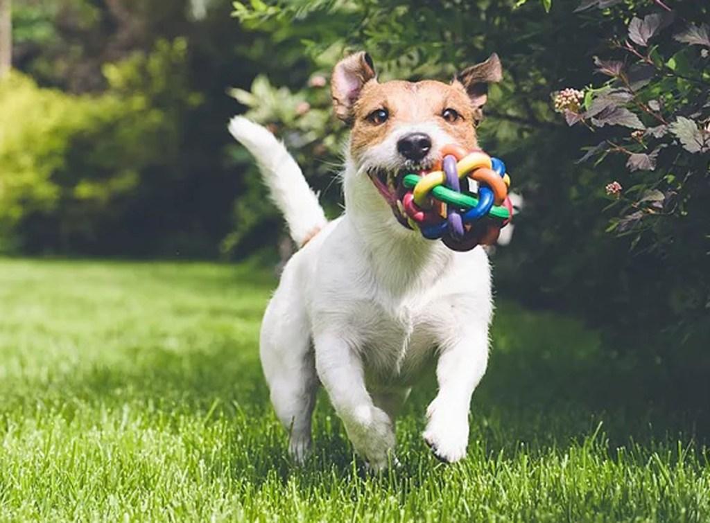 A importância de brincar com seu pet