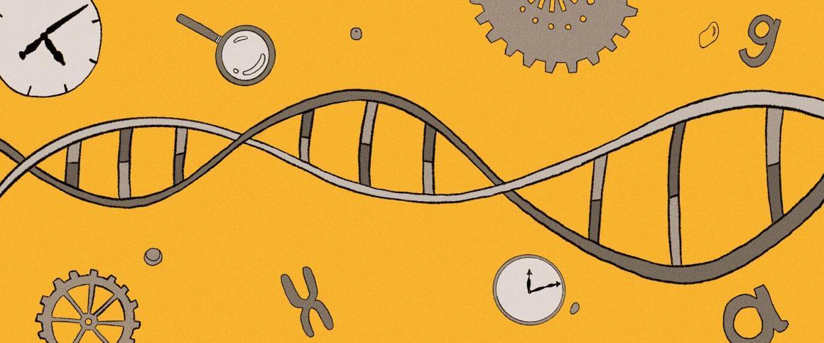 Ilustração de capa: linha do tempo em formato de DNA
