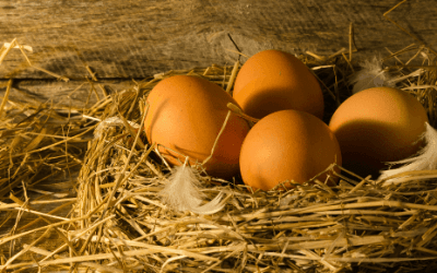 Why Is My Hen Not Laying? Reasons Why You May See a Decline in Egg Production