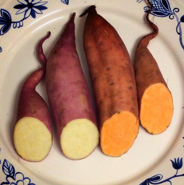 tatli-patates-beyaz-turuncu