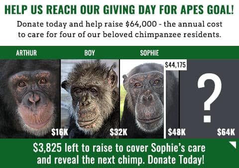 Screencap of image from Save the Chimps