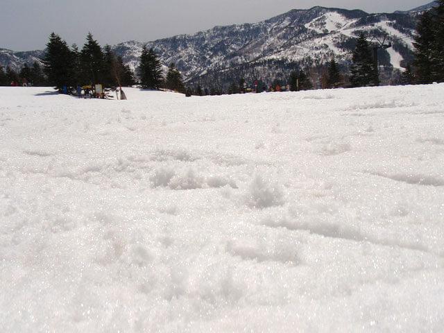 春シーズンのシャバ雪