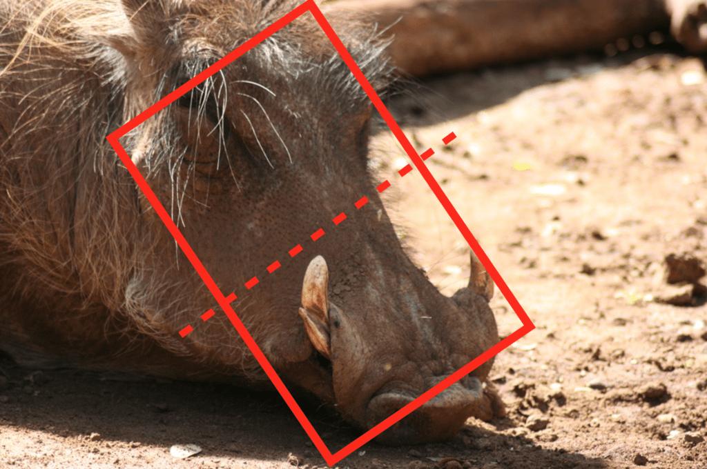 Warthog Functional Diagram