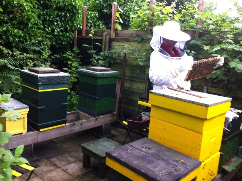sprzęt pszczelarski, wyposażenie pasieki miodu, założenie pasieki miodu, miodarki sklep, sklep z miodarkami, miodziarka, wirówka do miodu, miodarka, linia do wirowania miodu