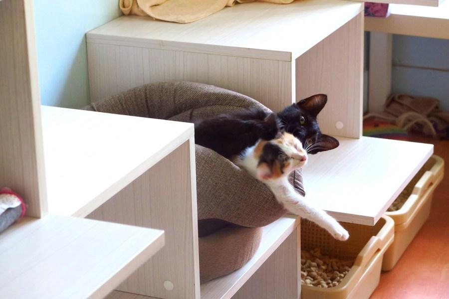 [臺北美食推薦] 讀貓園貓咪中途咖啡,店貓們都很黏人的貓主題餐廳!