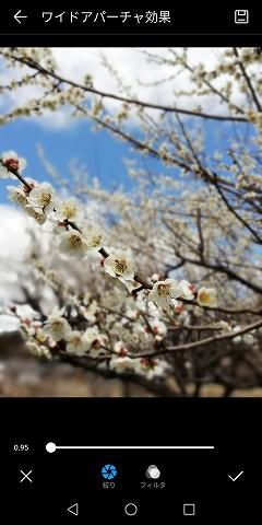 手前の花にピントを合わせて撮ってます。
