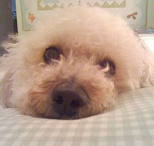 Brenda's buddy, Bailey