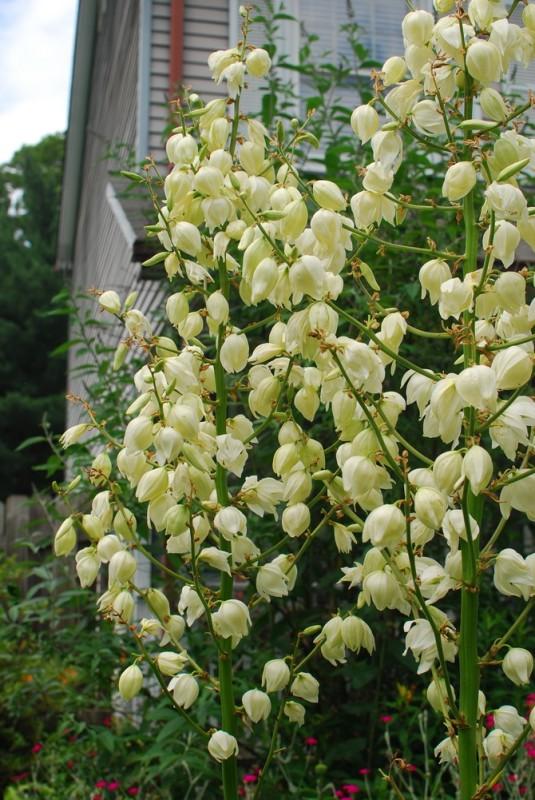 Pat Sloan white flowers
