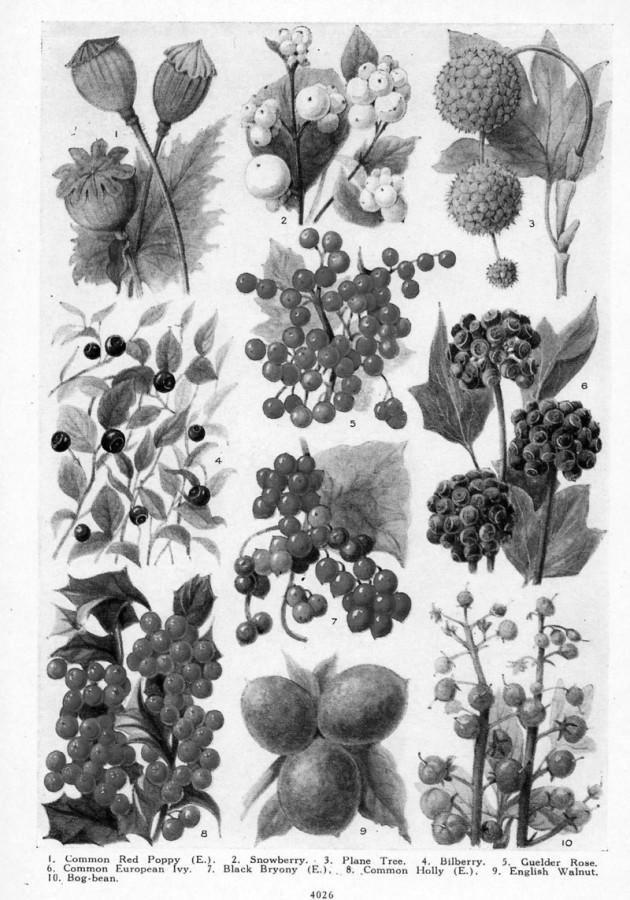 Cutting-Table---BW-Botanical-1